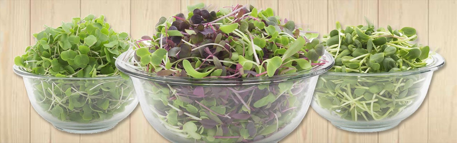 Micro-greens salad mix organic vegetables super fresh greens salad