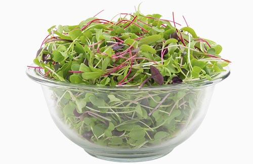Organic microgreen salad sweet and spicy mix micro-greens