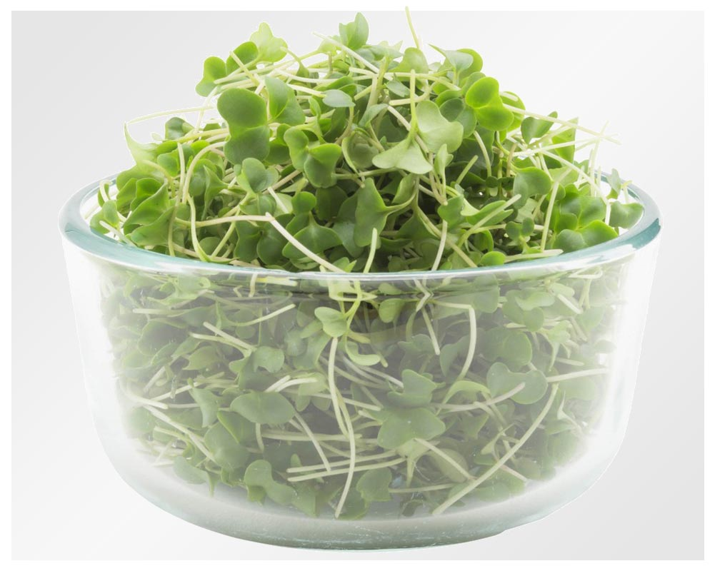 Organic broccoli micro greens mixes restaurants farm fresh greens pea shoots