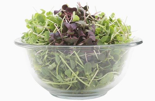 The Original Mix Super Salads organic microgreens sunflower kale radish arugula